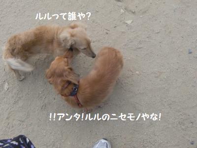 ルルじゃない!!