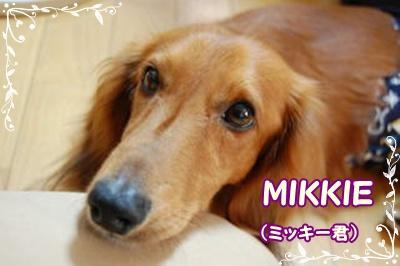 ミッキー君。