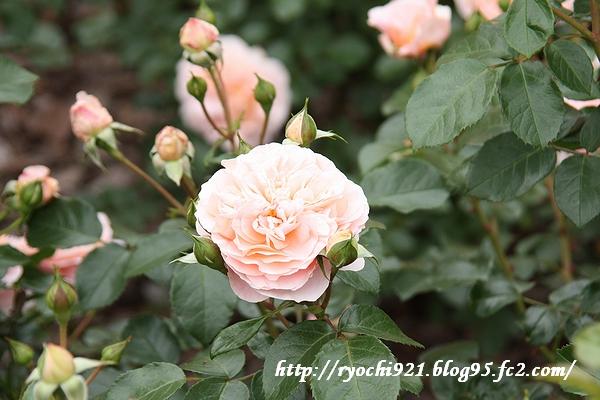 2010_5_21 369