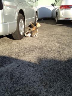 猫の集会 山下