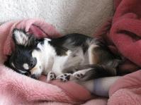 寝るチマさん1