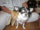チマと子猫