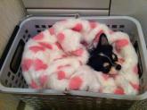 チマさん毛布の中
