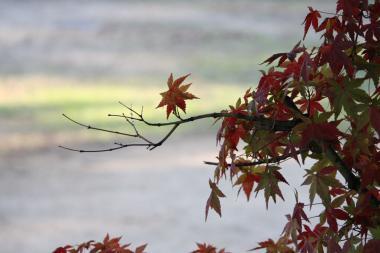 丸亀城紅葉2