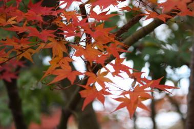 神谷神社11.2