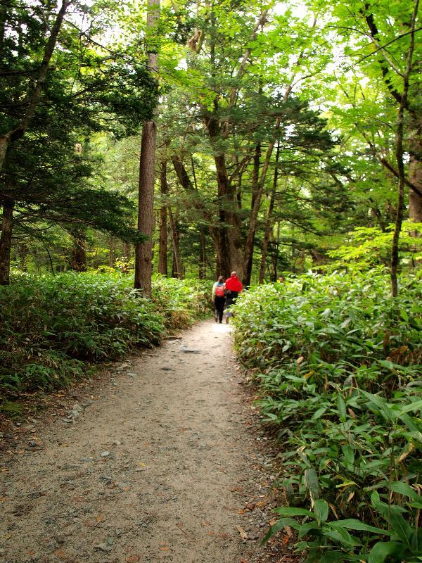 上高地 大正池から自然研究路