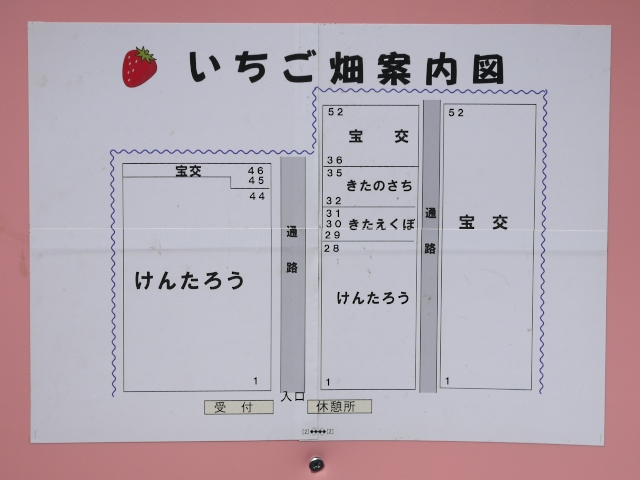 Strawberry_04.jpg