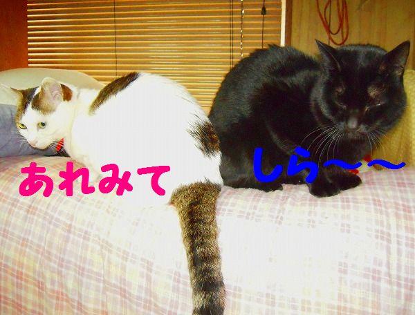 愛&ク~☆ 045