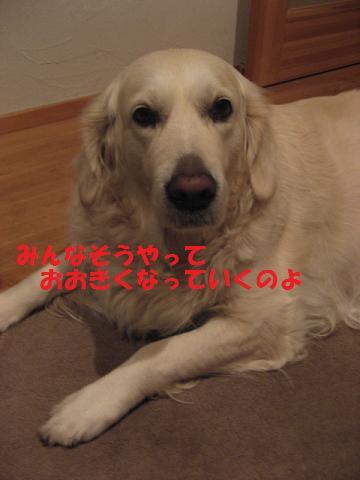 20091126003.jpg