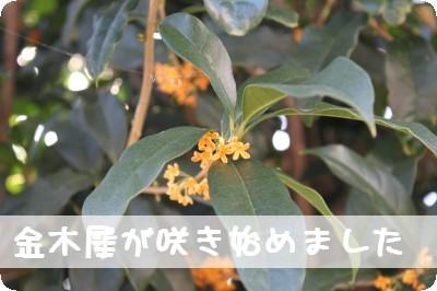 IMG_1693-1.jpg