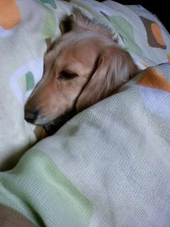 さくら寝てるんかい