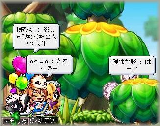 Maple_091230_060131.jpg