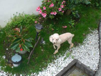 suika-0620-06.jpg
