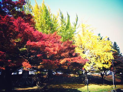 山の方は紅葉がキレイ