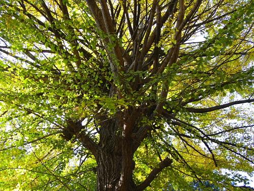 すごい細かい枝がいっぱい~!先端まで栄養を行き渡らせる生命力に感動!私なんて髪の毛とか爪とかにまで栄養が届かないもんね。。。