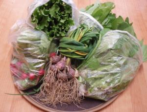 20110607手作り野菜