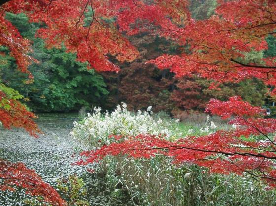 221楓と長谷池