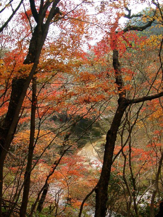 01 西山谷の紅葉