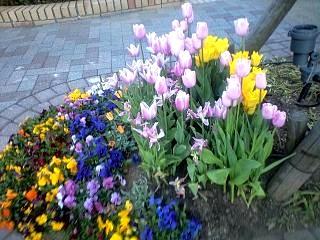 お花(その3)
