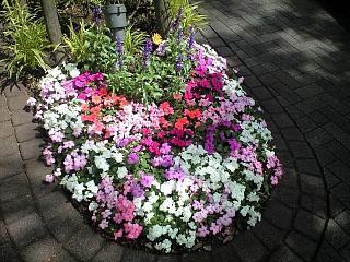 地元のお花(その1)