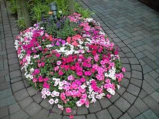 地元のお花(その2)