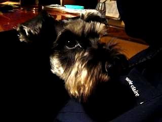 座敷犬(その2)