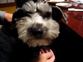 座敷犬(その3)