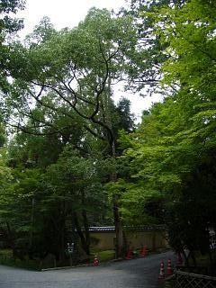 金閣寺(その16)