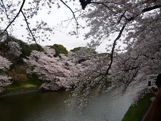 お花見(その8)
