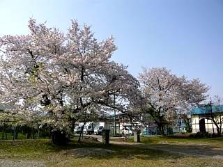 福島の桜(その3)