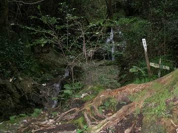 初音の滝4