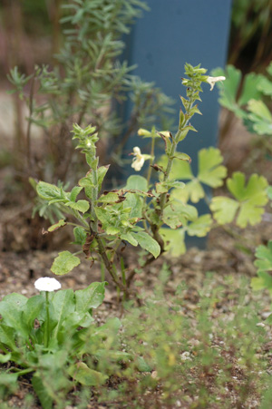 kibanaakigiri20091005-2.jpg
