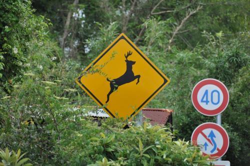 鹿注意!!
