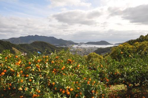 みかん畑と内海湾