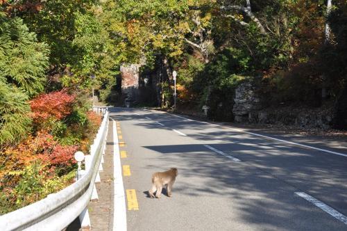 猿のいる道路