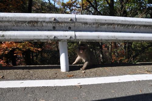 猿が見てる