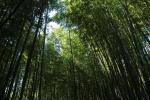 11年07月10~13日 京都・和歌山旅行 040-1