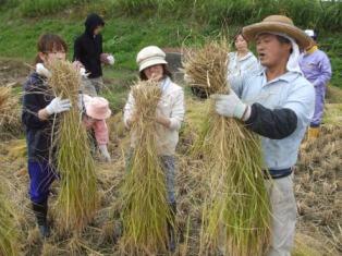 H21稲刈りHP3