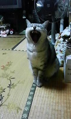 「あつーい」ごんちゃん