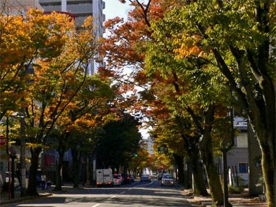 新潟市のけやき通り