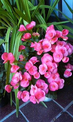 玄関の花(2010.11.06)