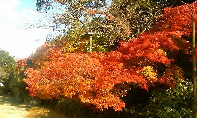 陶山神社2(2010.11.18)