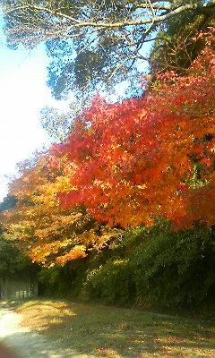 陶山神社1(2010.11.18)