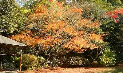 谷窯別荘の紅葉(2010.11.23)
