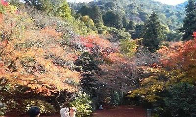 谷窯別荘庭園内(2010.11.23)