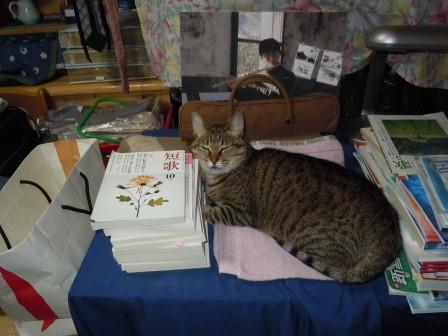 のんちゃん(2011-07-02)