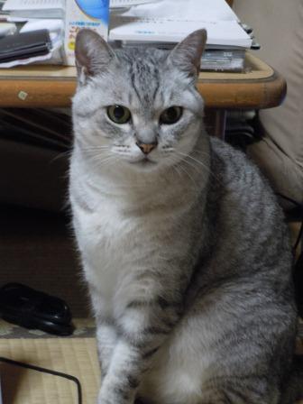 ごんちゃん2(2011-07-02)