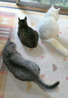 猫さんたちのメリークリスマス(2006.12.25撮影)