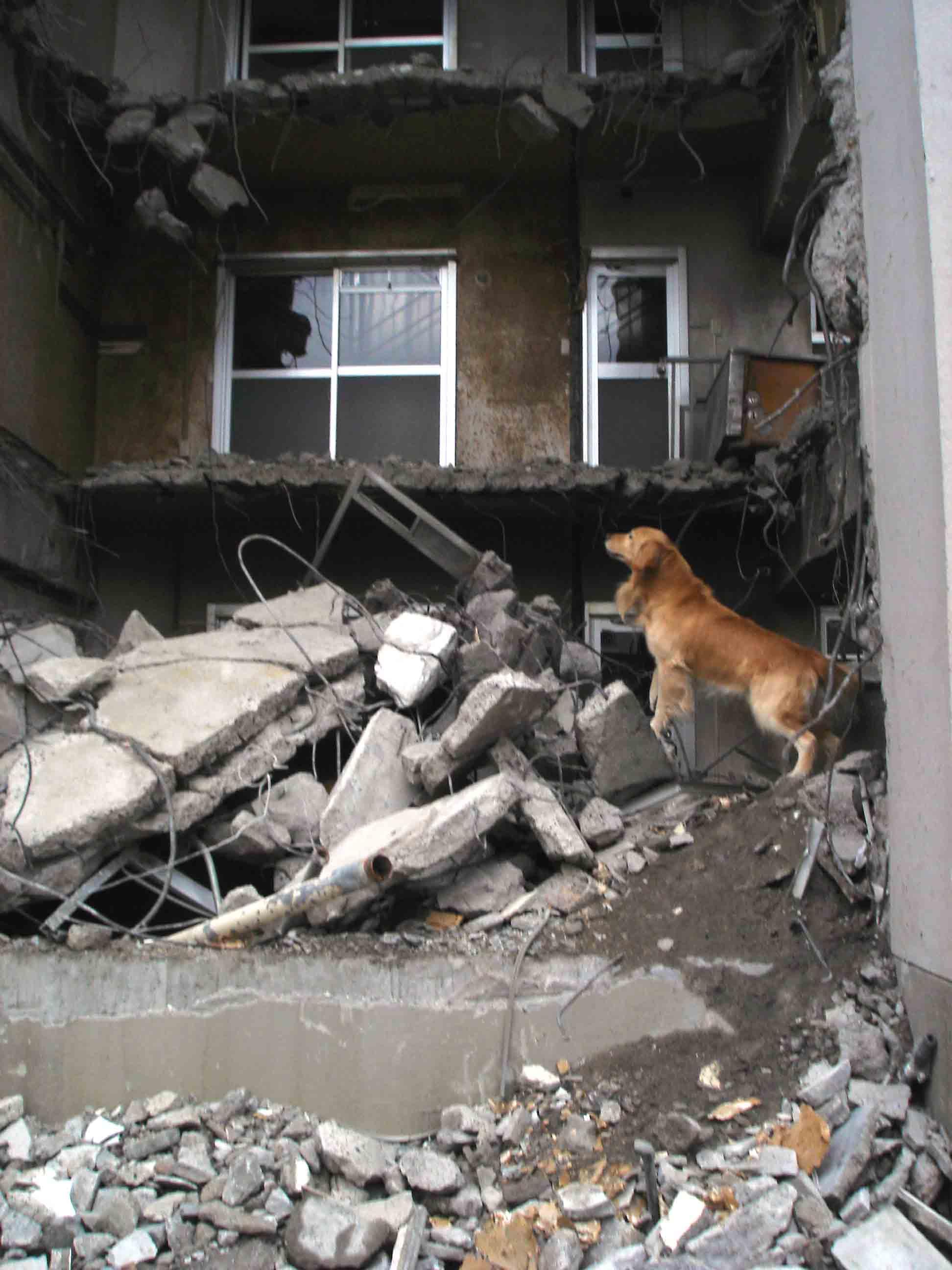 瓦礫現場捜索訓練③