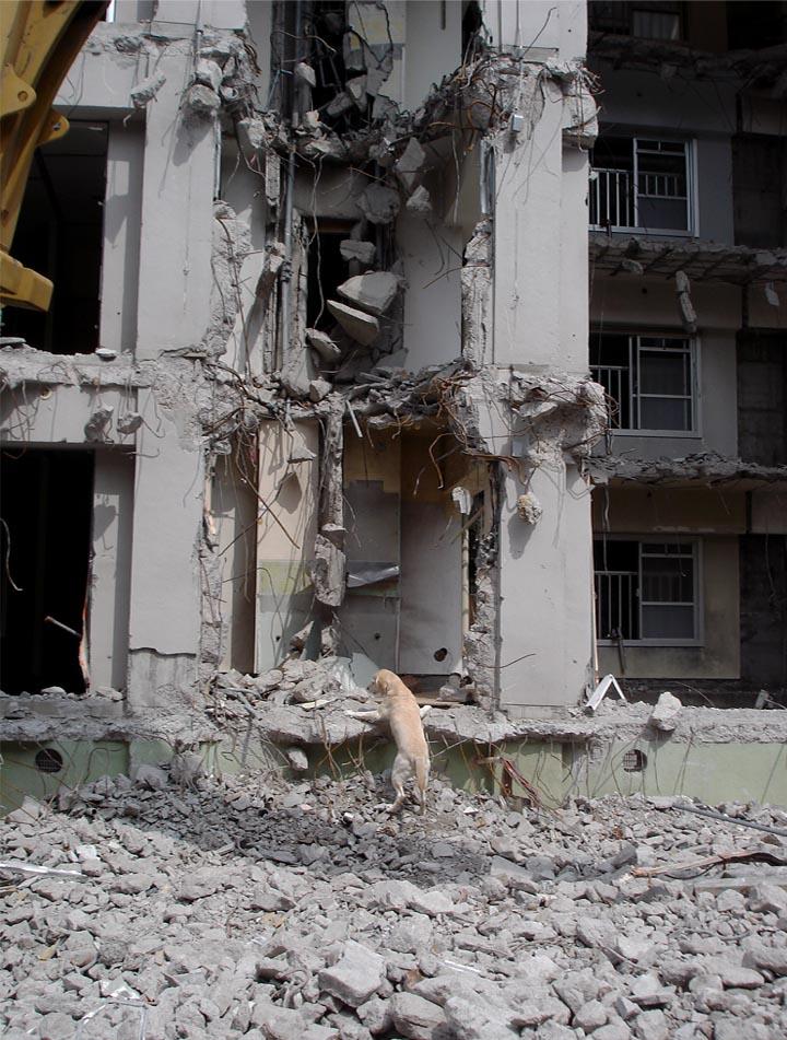瓦礫現場捜索基礎訓練③